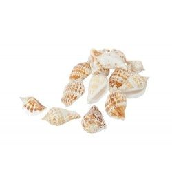 Déco festive, Filet de 150 gr de coquillages de déco, 80438, 3,20 €
