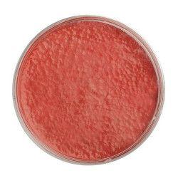Maquillage rouge texture mousse 15 g Accessoires de fête 15691